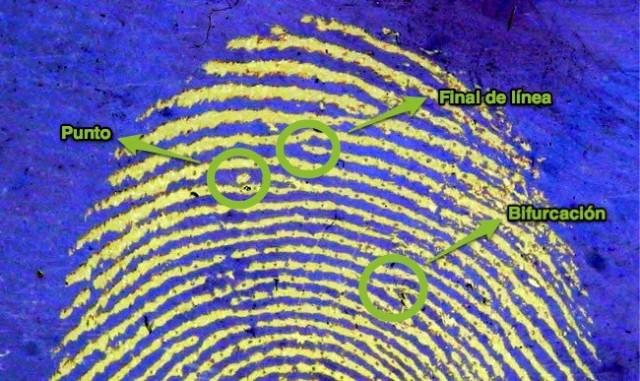 FingerprintMinutia